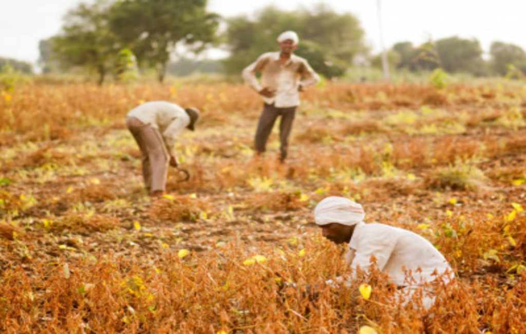 Skilling in organic farming for Self Help Groups