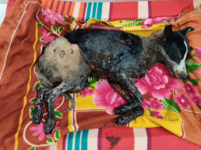 Rescue And Rehabilitate Sick and Injured Animals